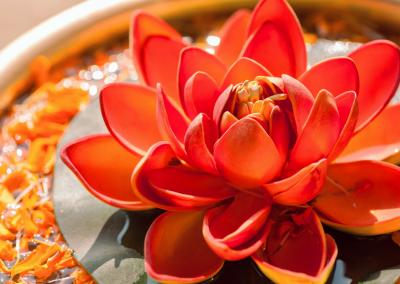 PlayfulLoving - Coaching with Viktoria orange lotus flower