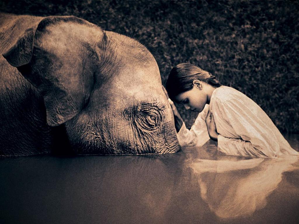 elephant-and-human-love